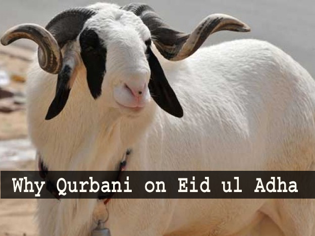 Why Qurbani on Eid ul Adha