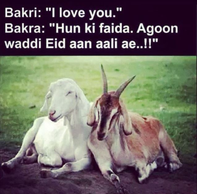 Eid ul Adha Jokes